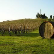 Chianti Shore Excursions