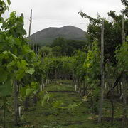 Vesuvius Wine Tours